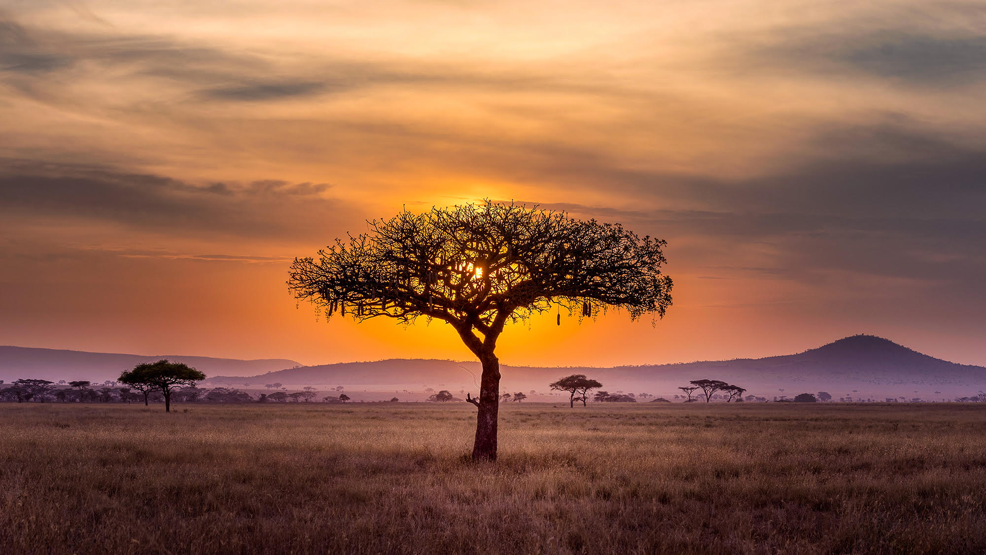 African tree standing alone in middle of field as sun sets in the background above mountains.